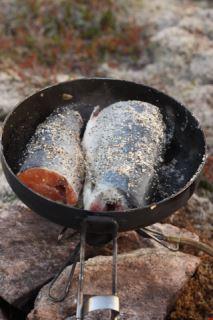 Freshly caught arctic char :)
