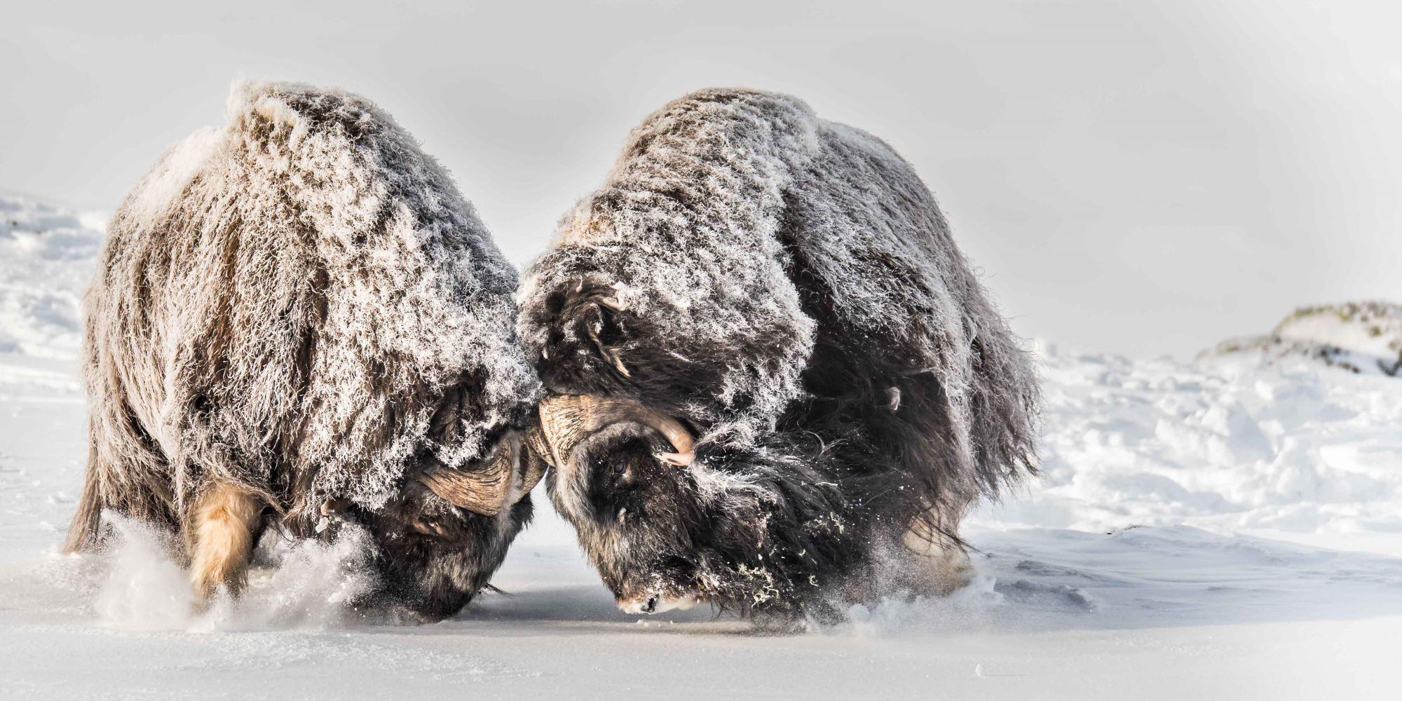 Fotosafari med personlig guide,vinter
