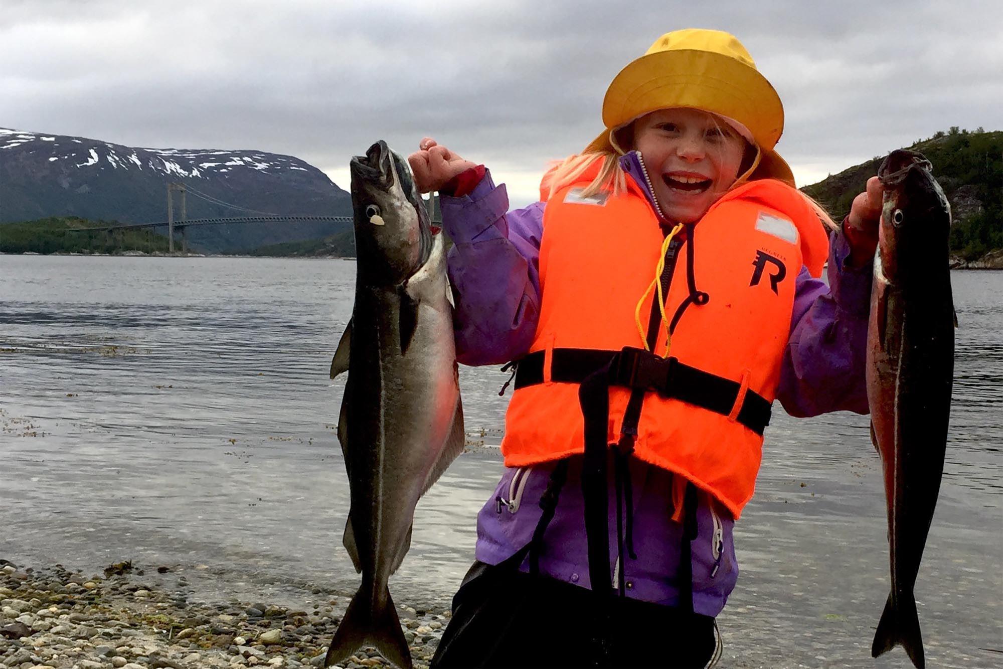 Seifiske i Kjellingstraumen
