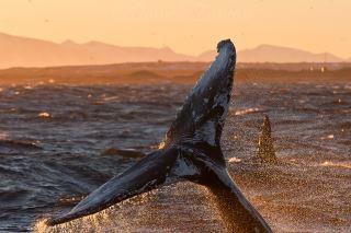 Whalesafari Andenes