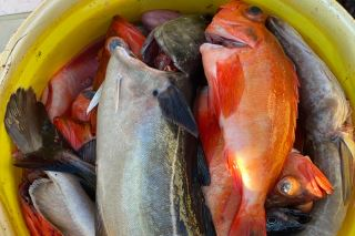 Fiskebruket