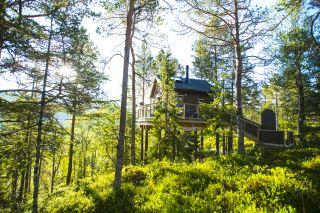 Himmelhøy Tretopphytter