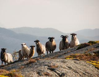 Guidet vandring i Skeisnesset